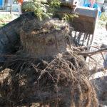 Tree Root Guide -paneelit