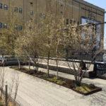 Platipus D-Man -juuripaakkutuenta, High Line Park, NEW YORK