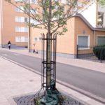 Asennuskehikko HA13K juurisuojaritila Rondello 2.0Q ROQ150 puun runkosuoja MeierGuss